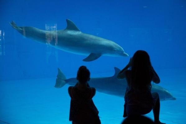 National Aquarium Dolphins Move to Seaside Sanctuary – Video