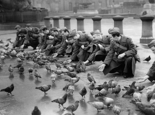 Feed The Birds | World War II