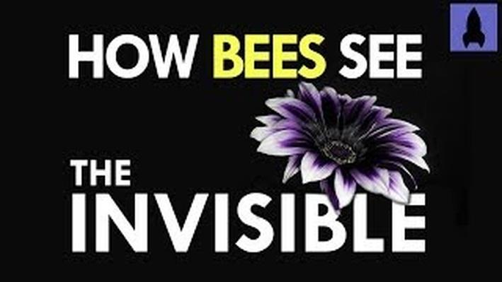 How Bees Can See the Invisible | It's Okay to Be Smart