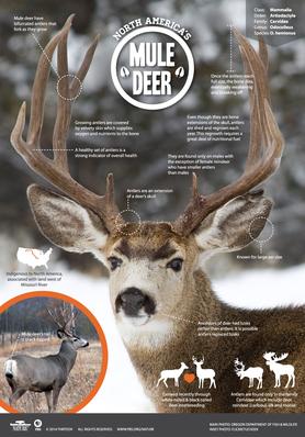 Infographic: North America's Mule Deer