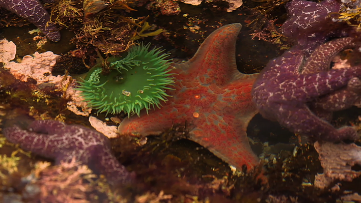 Investigation of Sea Star Wasting Syndrome