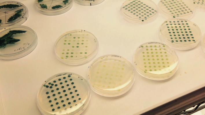 Algae & Bioenergy
