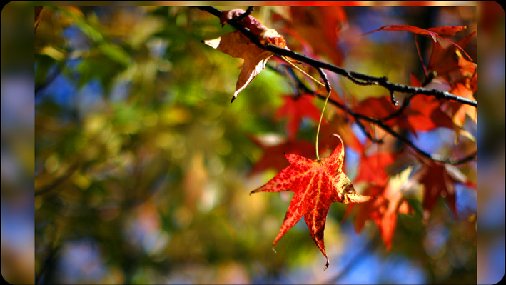 Know Ohio: Fall Foliage