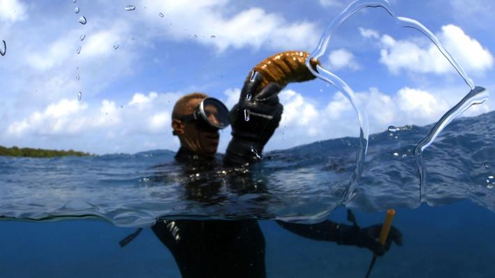 Island Life | Life on the Reef