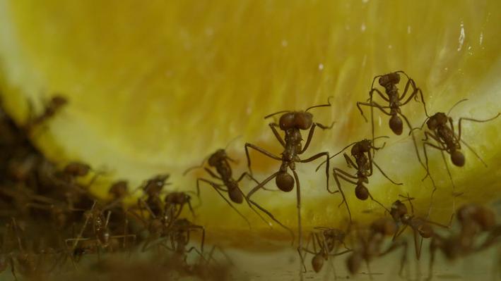 Leaf-Cutter Ants | San Diego Zoo Kids
