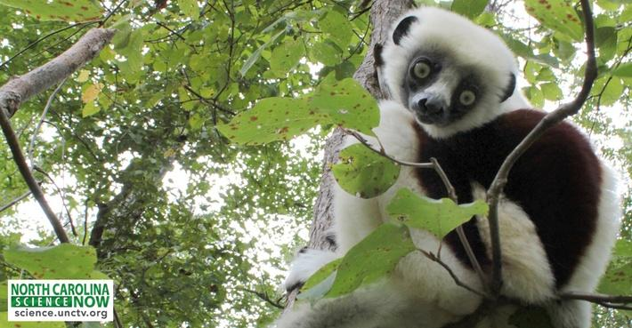 Leaping Lemurs of Data