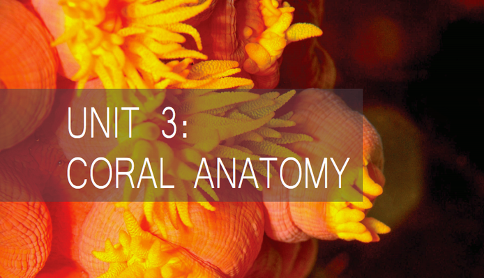 Coral Anatomy | Living Oceans