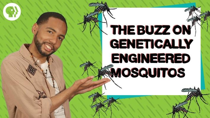 Can Genetically Engineered Mosquitoes Help Fight Disease? | Above the Noise