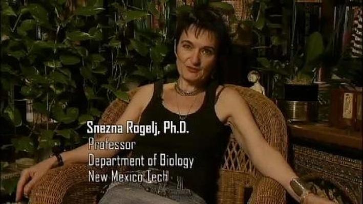 Snezna Rogelj, Ph.D., Professor