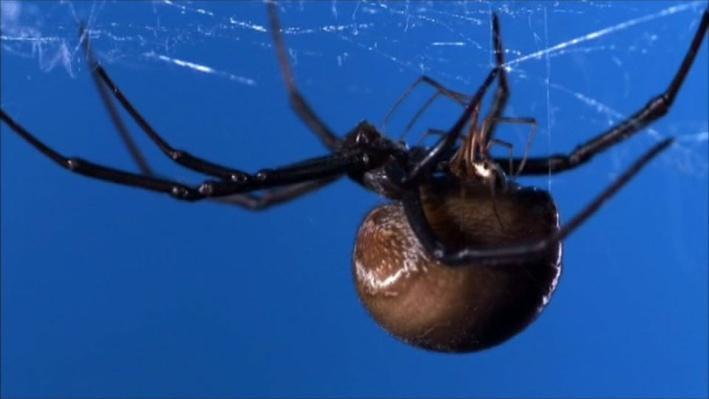 NOVA: Science Now, Episode 2   Spider Rituals