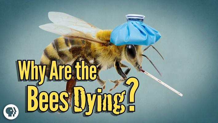 Why Are the Bees Dying? | It's Okay to Be Smart