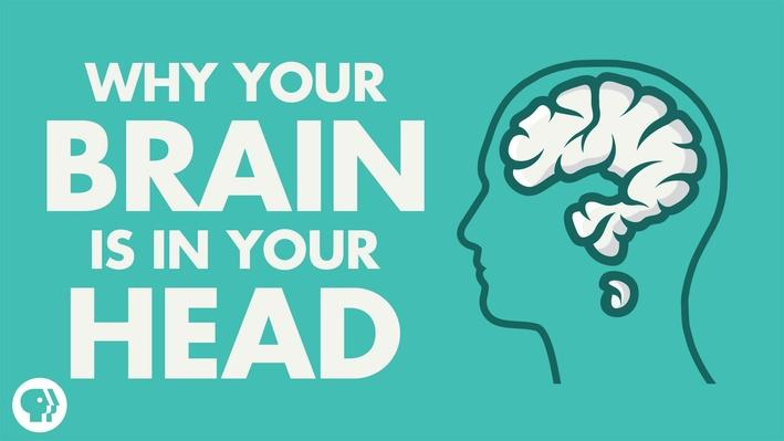 Why Your Brain Is in Your Head | It's Okay to Be Smart