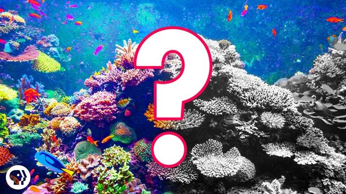 Can Coral Reefs Survive Climate Change? #OursToLose | It's Okay to Be Smart