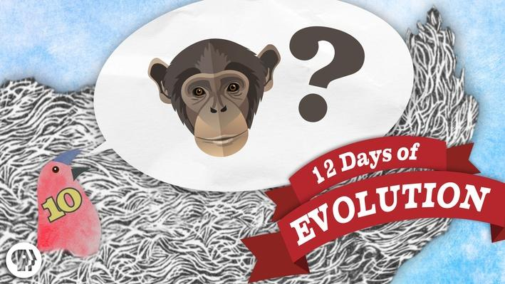 Why Are There Still Monkeys? - 12 Days of Evolution #10 | It's Okay to Be Smart