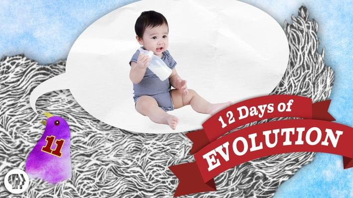 Are Humans Still Evolving? 12 Days of Evolution #11 | It's Okay to Be Smart