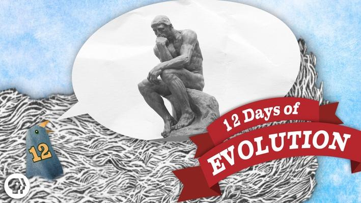 Does Evolution Have a Point? 12 Days of Evolution #12 | It's Okay to Be Smart