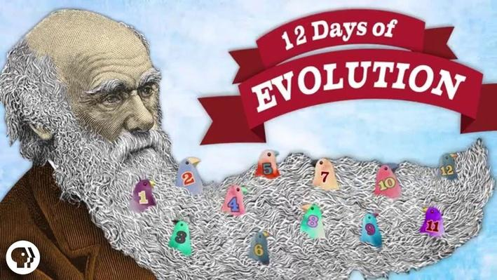 The 12 Days of Evolution - Complete Series! | It's Okay to Be Smart