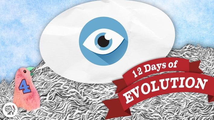 Can Evolution Make an Eye? - 12 Days of Evolution #4 | It's Okay to Be Smart