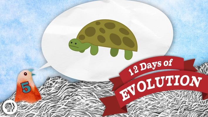 Have We Ever Seen a New Species Arise? - 12 Days of Evolution #5 | It's Okay to Be Smart