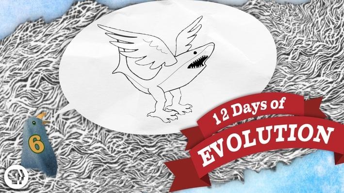 Evolution Is Dumb - 12 Days of Evolution #6 | It's Okay to Be Smart