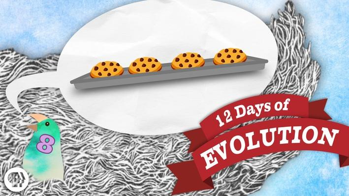 Does Evolution Violate the 2nd Law of Thermodynamics? - 12 Days of Evolution #8 | It's Okay to Be Smart
