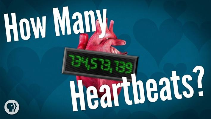 How Many Heartbeats Do We Get? | It's Okay to Be Smart