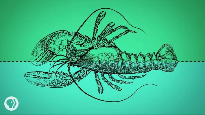 You Are an Upside-Down Lobster   It's Okay to Be Smart