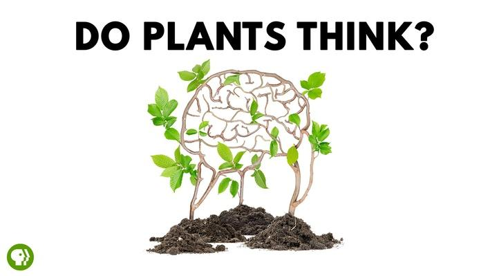 Do Plants Think? | It's Okay to Be Smart
