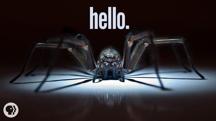 Why I'm Scared of Spiders | It's Okay to Be Smart