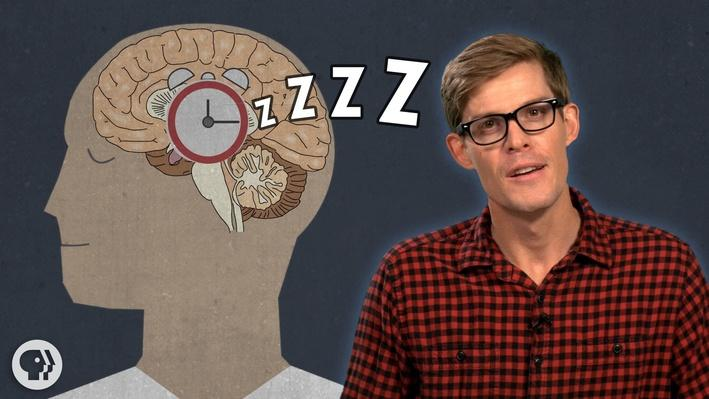 Why Do We Have to Sleep | It's Okay to Be Smart