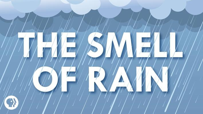 Where Does the Smell of Rain Come From? | It's Okay to Be Smart