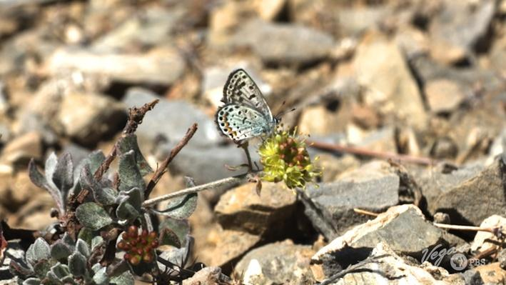 Butterflies | Outdoor Nevada