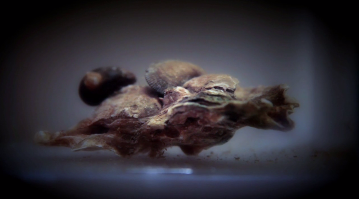 The Amazing Oyster Reef: Video | Nature Works Everywhere