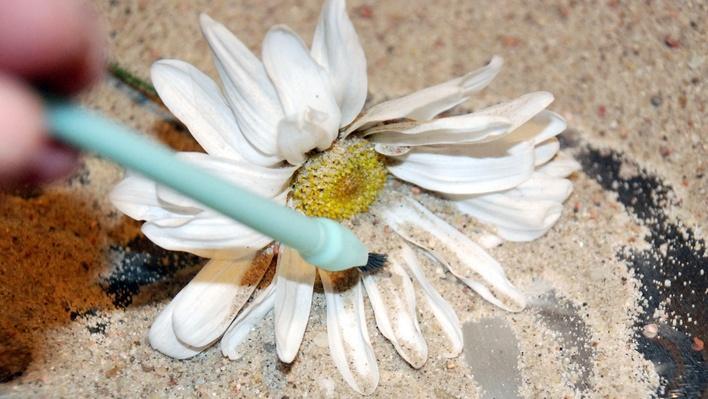 Paleontologist: Unearth a Flower