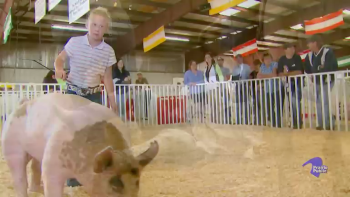 Our State Fair | Animals, Youth and Families