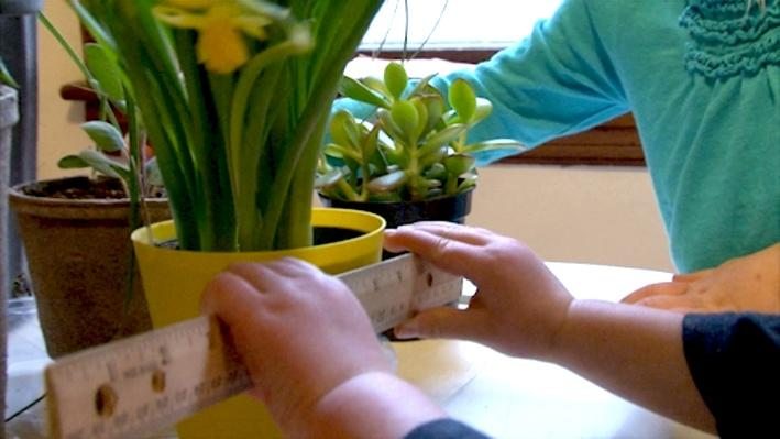 Plants: Individualized Instruction
