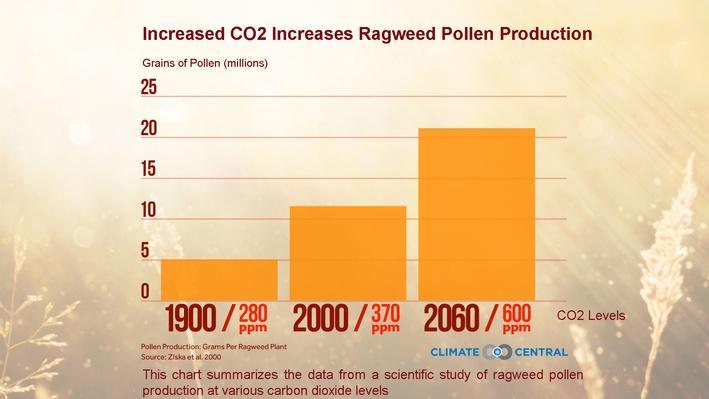 Ragweed Pollen