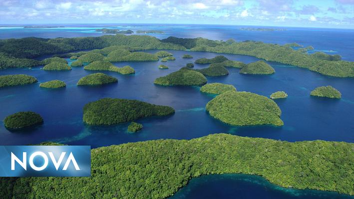 NOVA Next | Palau's Improbably Healthy Coral Reefs