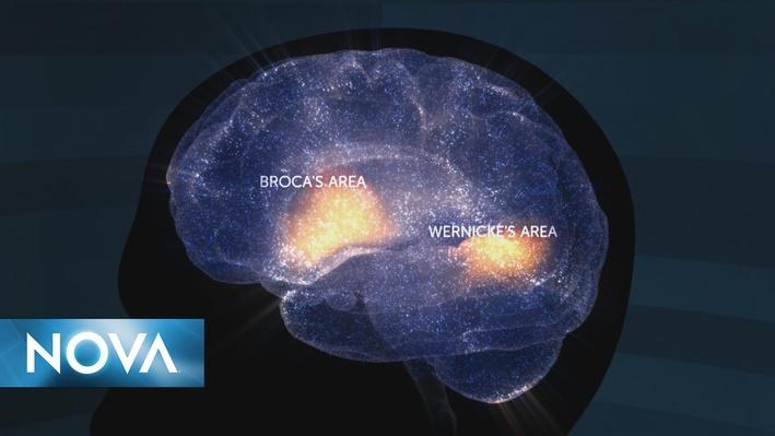 School of the Future | Cómo las Intervenciones de la Lectura Impactan el Cerebro