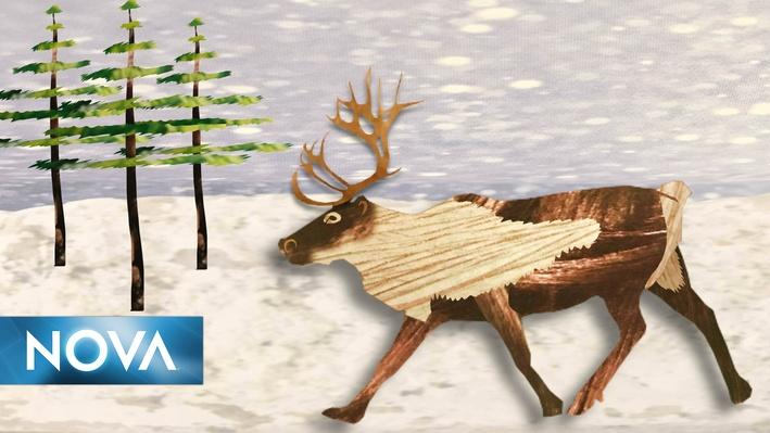 Gross Science | The Real Rudolph Has Bloody Antlers and Super Vision