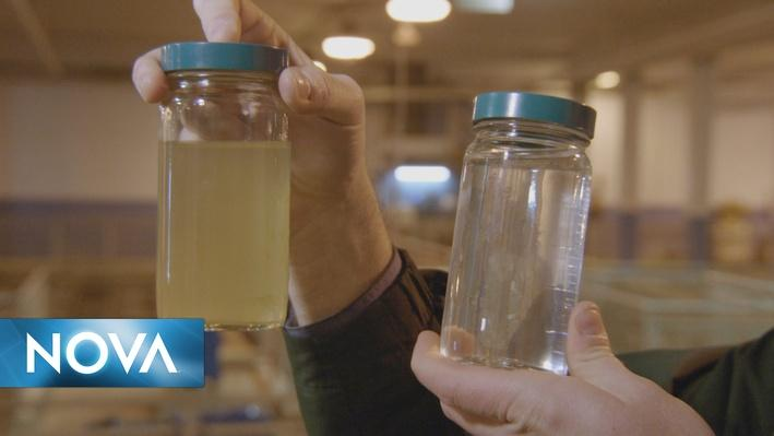 Poisoned Water | Making River Water Safe to Drink