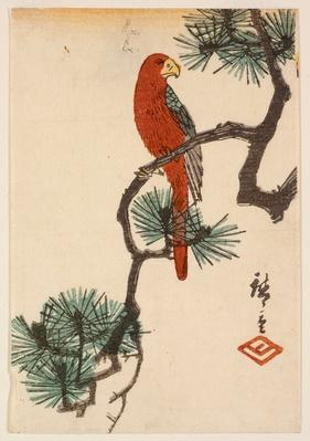 Parrot on Pine Branch (Matsu ni inko) / RISD STEAM