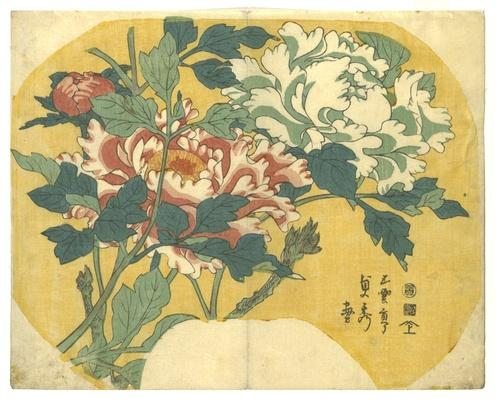 Peonies (Botan) / RISD STEAM