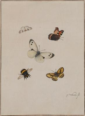 Study of Four Butterflies and a Bumblebee / RISD STEAM