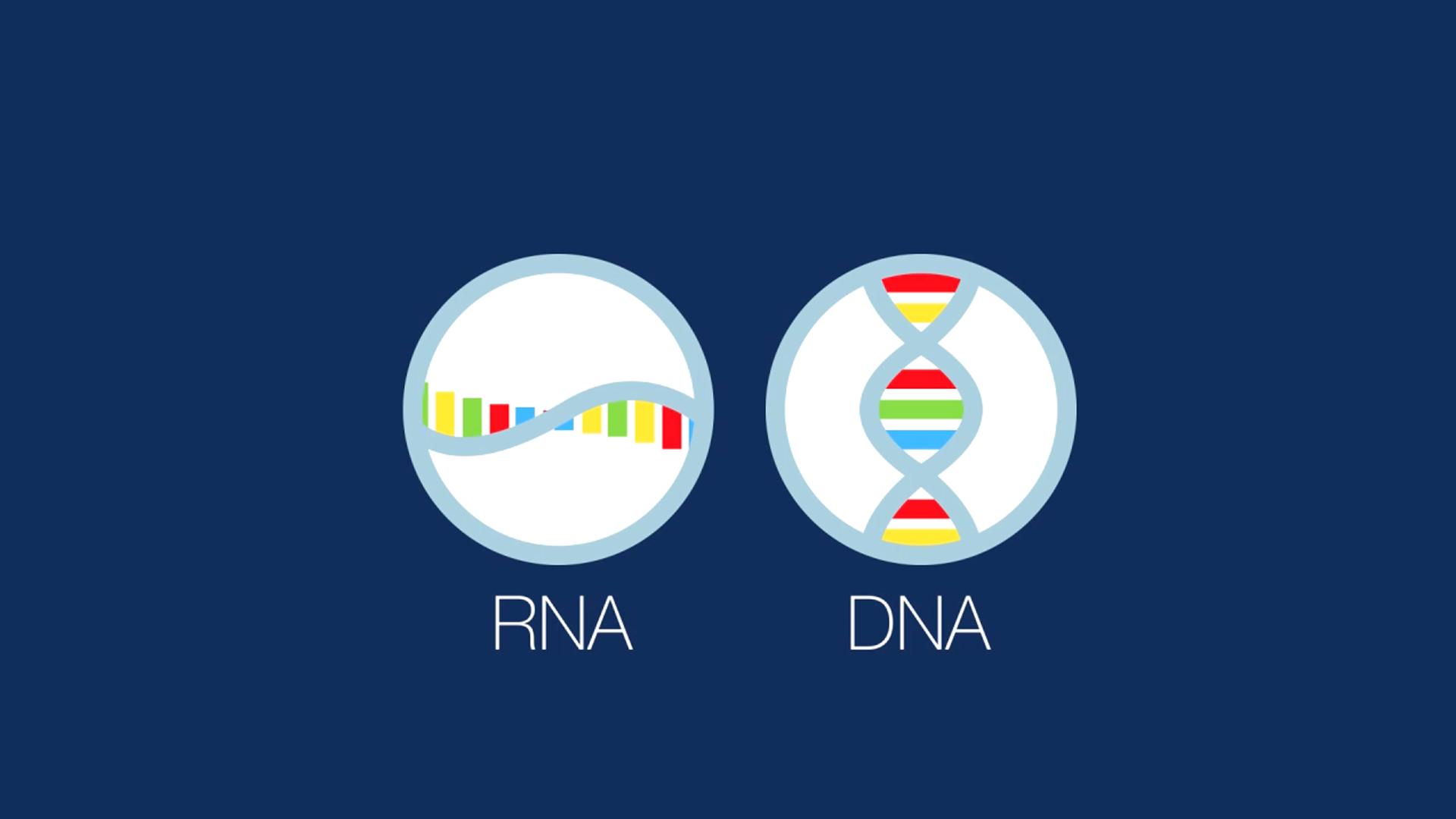 NOVA RNA Lab Lesson Plan   PBS LearningMedia