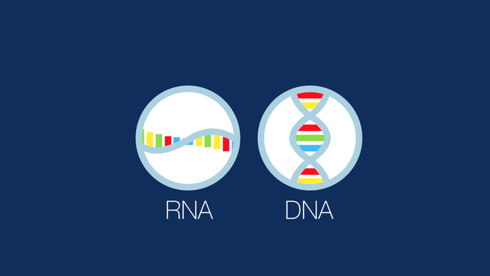 The RNA Enigma