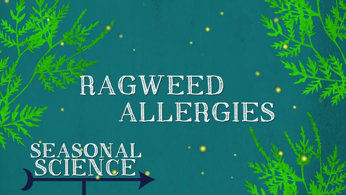 Seasonal Science: Ragweed Allergies