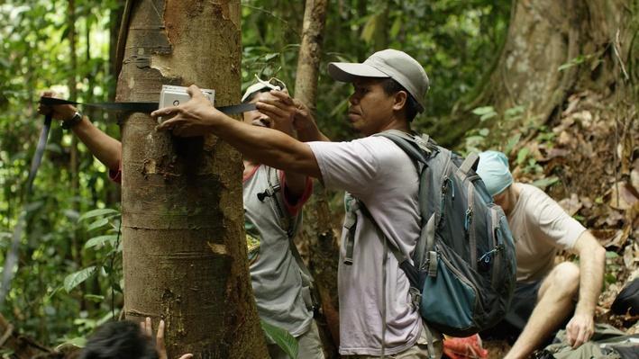 Recording the Rainforest | Part 3 Lesson Plan