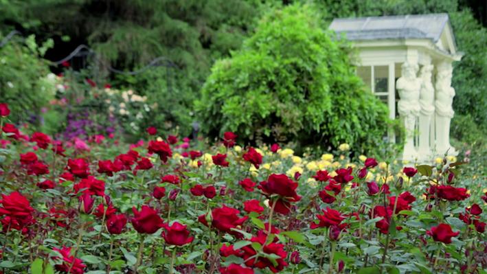 The Rose Garden: An Exhibition of British History | The Queen's Garden