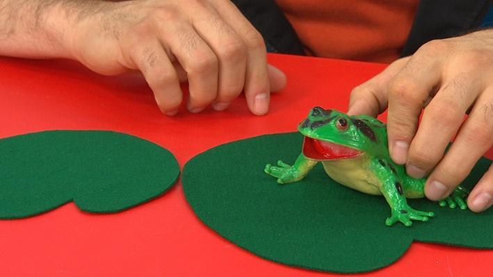 La grenouille qui bégayait | Histoires